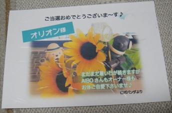 DSC01903a.jpg