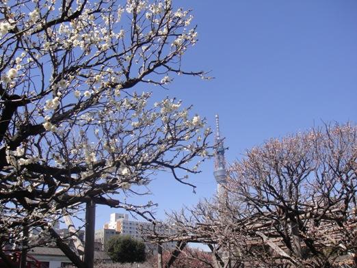 スカイツリー1.jpg