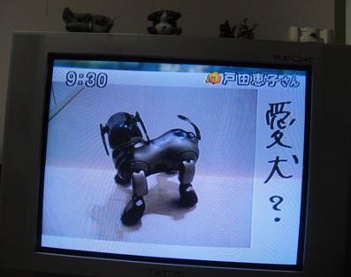 愛犬?.jpg